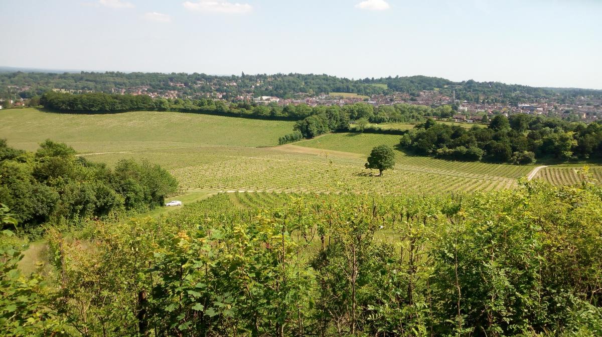 Inglaterra también hace vinos