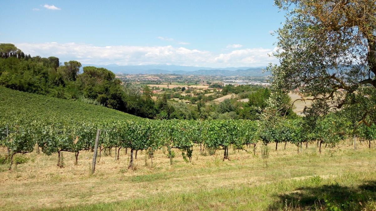 Cosimo Maria Masini, una Bodega Biodinámica en la Toscana Italiana
